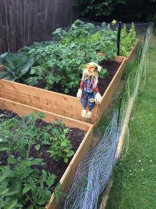 Scarecrow on allotment